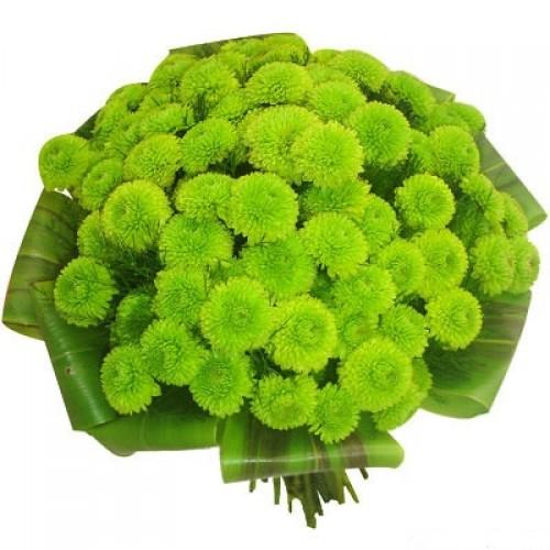 фото зеленая хризантема